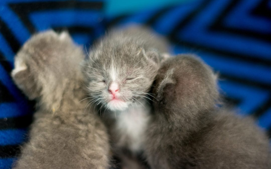 What To Do If You Find Orphaned Kittens